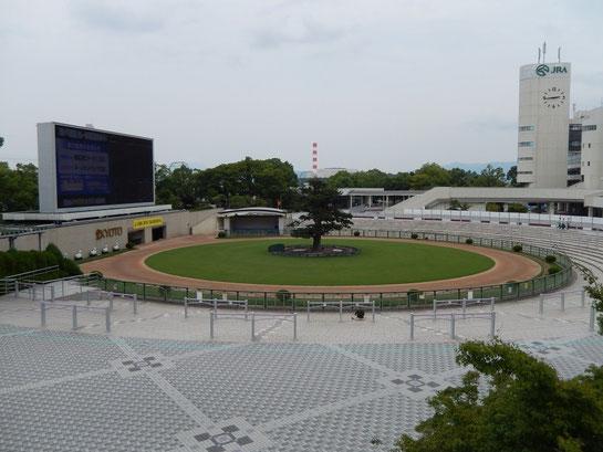 京都競馬場 丸パドックその2