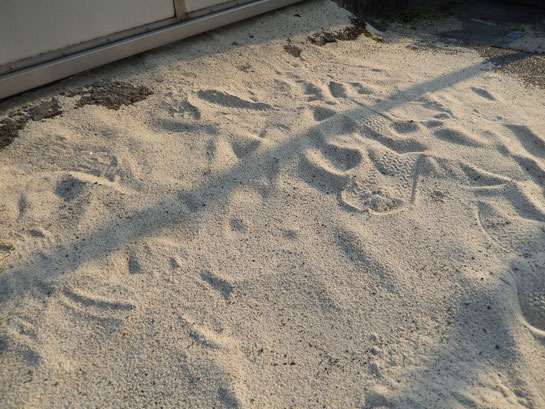 笠松競馬場 ダートの砂