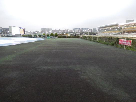 大井競馬場 内馬場 人工芝ゾーン