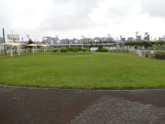 大井競馬場 内馬場 緑の広場