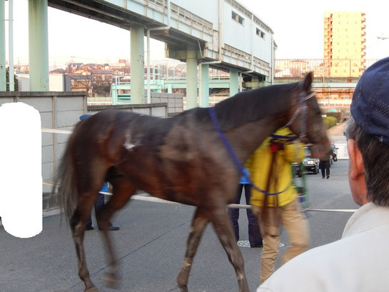 浦和競馬場 走り終えた競走馬