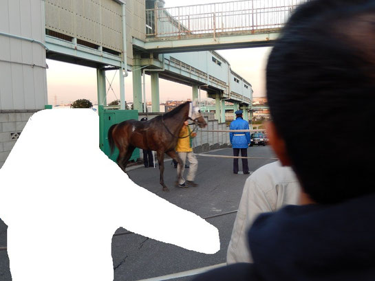 浦和競馬場 アクセス 歩道を歩く馬