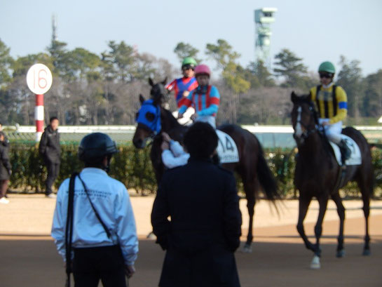 中山競馬場,グランプリロード,その2,引き上げてくる馬たち