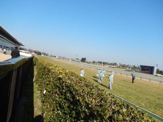 中山競馬場,直線の坂