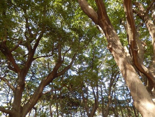 根岸森林公園,恵まれた自然