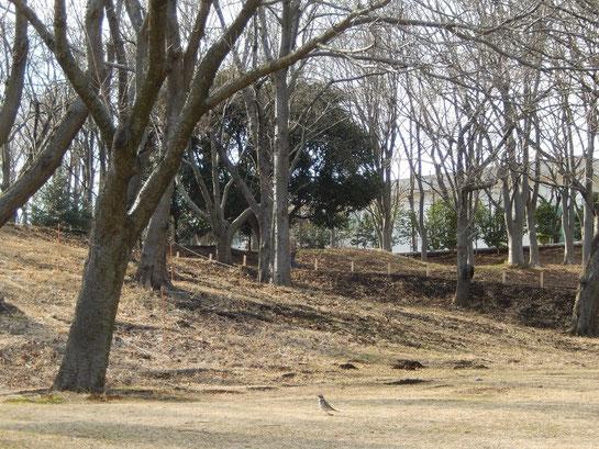 根岸森林公園,芝と冬木
