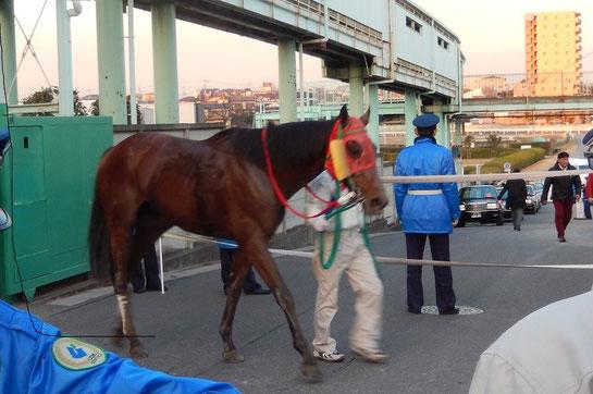 浦和競馬場 歩道を歩く馬 馬券攻略