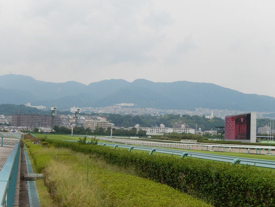 阪神競馬場 直線の坂