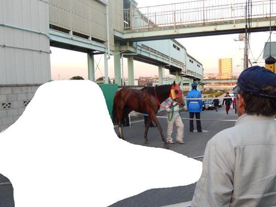 浦和競馬場 歩いてアクセス