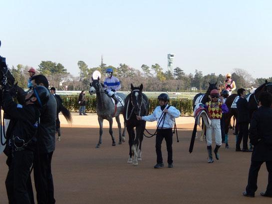 中山競馬場,グランプリロード,引き上げた馬と迎える厩務員たち