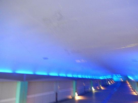 大井競馬場 内馬場への道 幻想的な照明