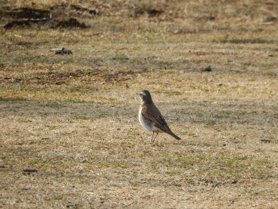 根岸森林公園,くつろぐ鳥