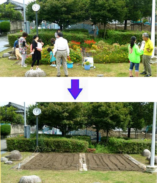 親子がお花を摘み終えた花壇は、さっそく「みのお園芸ファーム」のメンバーが耕し「冬花壇」に備えました。