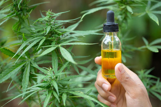 6 beneficios medicinales de la cannabis