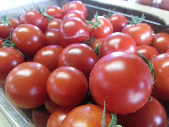 栗山産ミニトマト