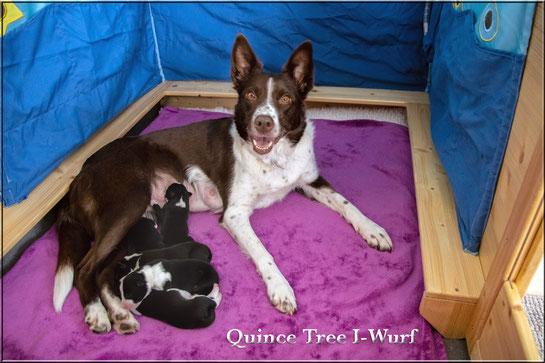 Quince Tree I-Wurf *25.03.20 (2 Rüden / 3 Hündinnen)