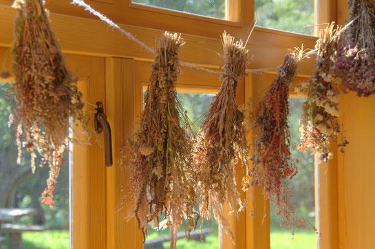 Visit Latvia, natural herbal brushes