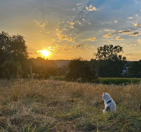 Mit Paula beim Sonnenaufgang