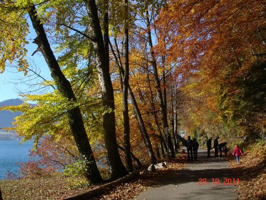 Herbstpauschale - Spaziergang in Fürberg am Wolfgangsee unter bunten Bäumen.