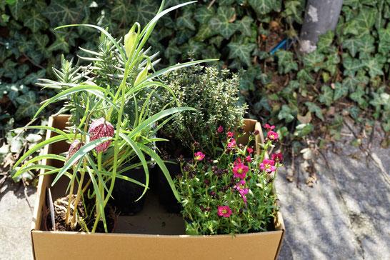 Ökomarkt auf dem schönen Chamissoplatz - Berli/ Kreuzberg. Meine ersten Frühlingspflanzen für den Balkon...