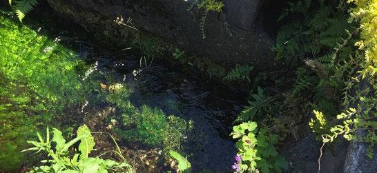 小さい水路に水草が青々して綺麗です。なにげに水路のまち生地。