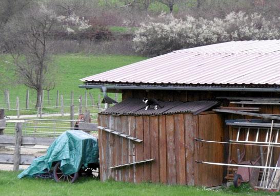Fine - über die Katzentreppen aufs Dach :o)