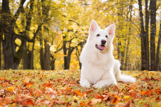 Foto: © coldwaterman - Fotolia.com