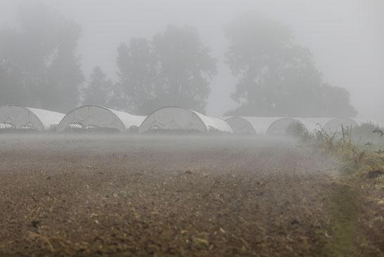Der Nebel lichtet sich: Viele Fragen müssen bei der Hofübergabe geklärt werden.