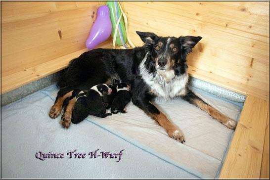 Quince Tree H-Wurf *03.03.19 (2 Rüden / 2 Hündinnen)