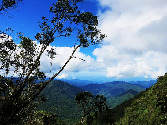 Blick vom Gipfel des Gunung Brinchang über die Cameron Highlands