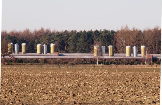 Hähnchenmastanlage im mittleren Emsland - Foto: Jutta Over