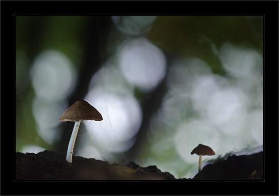 Der düstere Pilz