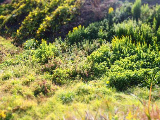 ジオラマモードは箱庭的になるんですねー。小人の森的風景。