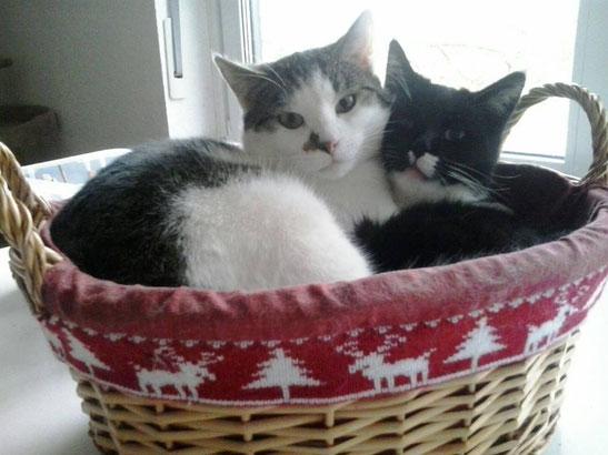 Merlin und Miro im jungen Alter von 4 Monaten