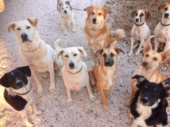 Zingarelli Tierschutzhunde