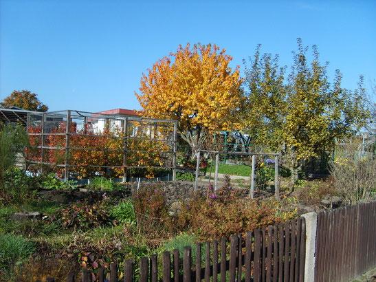 auch im Herbst ist der Garten schön