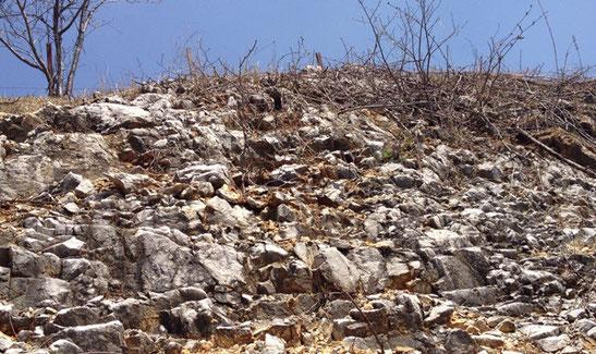 土壌は、ごつごつした石灰岩。