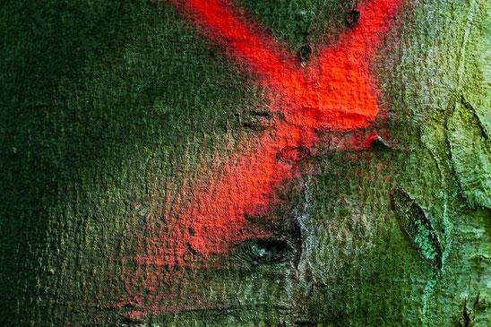 Rot-Grün