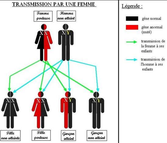 Exemple de transmission du gène du daltonisme par une femme. Source : TPE daltonisme.