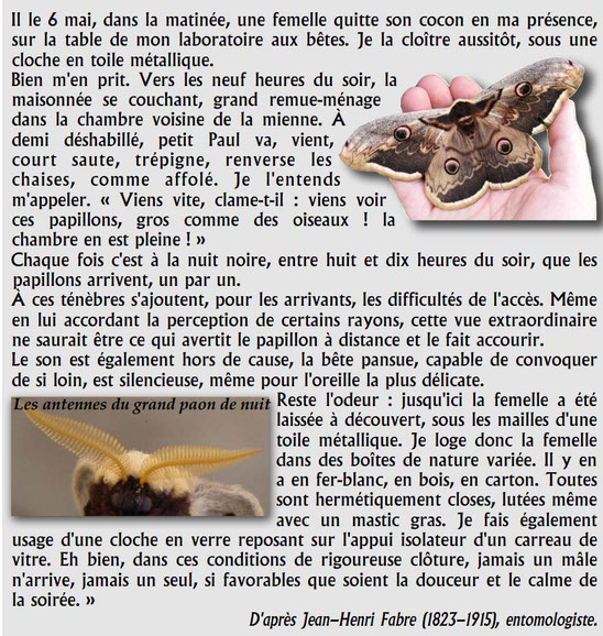 Observations de J-H. FABRE sur les papillons. Sources: http://jovinem.free.fr/iWeb4/Reproductionmilieux_files/100428Reproductions.pdf