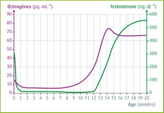 Concentrations sanguines en oestrogène et testostérone au cours du temps. Source: internet.