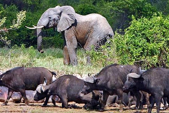 コンゴ民主共和国の世界遺産「ヴィルンガ国立公園」