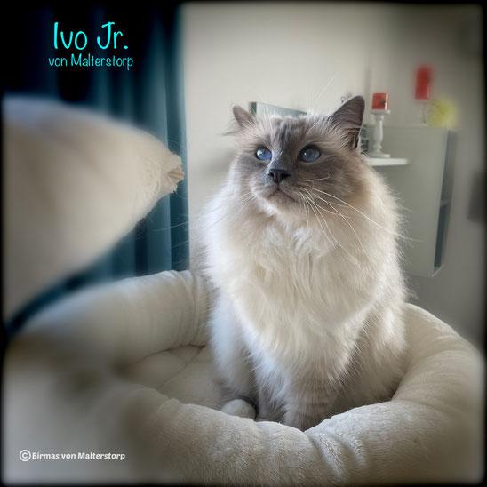 Ivo Junior von Malterstorp