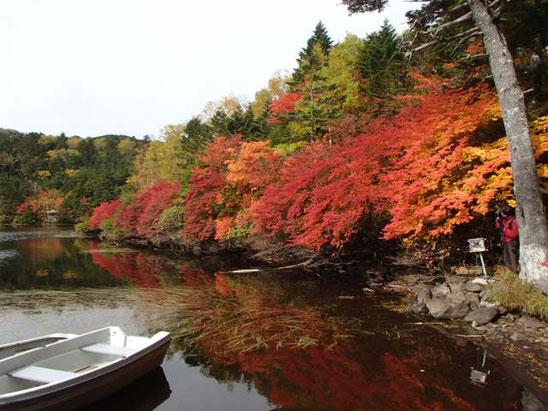 白駒池 高見石 丸山 苔と紅葉 秋のトレッキングガイド