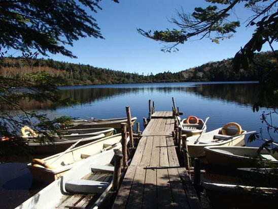 白駒池 にゅう 高見石 丸山 苔の森 ガイド