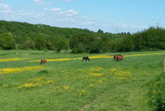 Meine Pferde leben in einem Offenstall - Zwischen den Turnieren ganz wichtig - Koppel(aus)zeit auf der Weide!