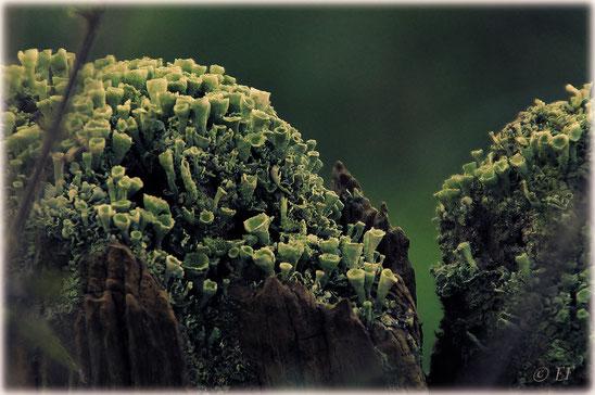 Wie eine kleine Bergwelt