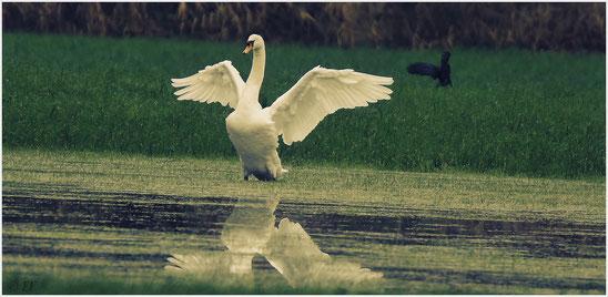 Flügel wie ein Engel