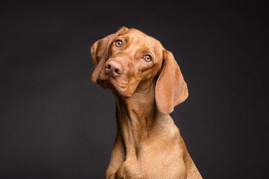Hunde OP Versicherung der Hanse Merkur