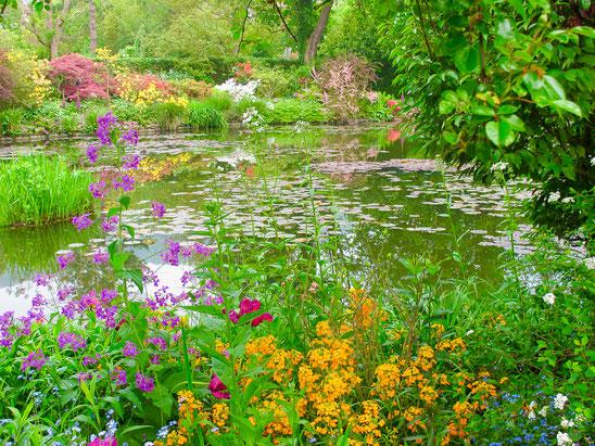 Bild: Der Seerosenteich im Garten des Malers Claude Monet in Giverny